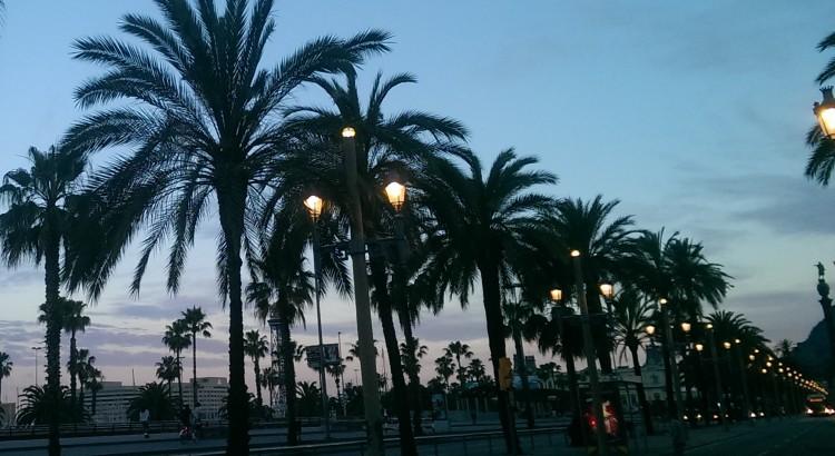 palmieri barcelona